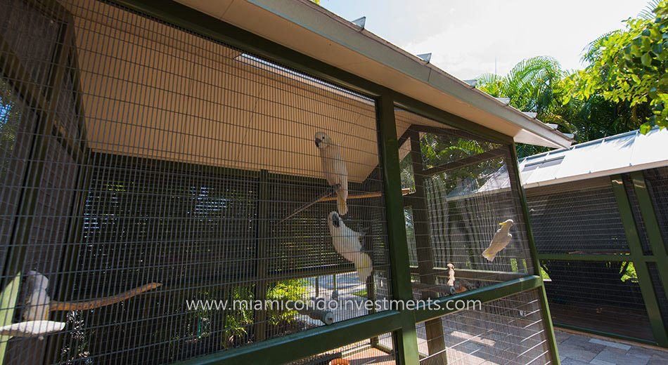 Parrots at the aviary on Fisher Island in Florida