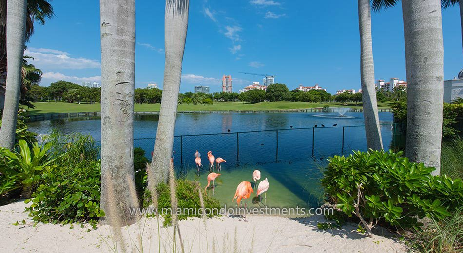 Flamingos on Fisher Island