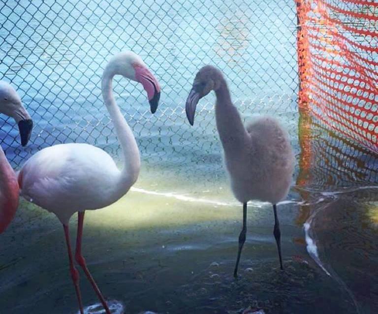 Moms the Flamingo